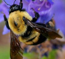 BUMBLE BEE by Betsy  Seeton