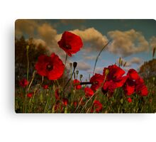 Poppy Field 2 Canvas Print