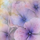 iPhone Case  Hydrangea by  Kira Bodensted