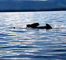 Pilot Whale and Calf  by Peggy Berger