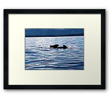 Pilot Whale and Calf  Framed Print