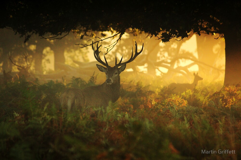 Autumn in the woods by Martin Griffett