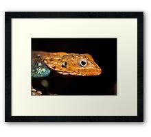 Agama Lizard Framed Print