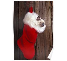 Kitten in stocking Poster