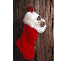 Kitten in stocking Photographic Print