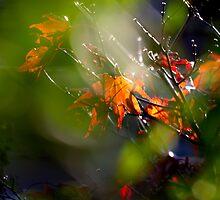 Summer to Autumn by Garry Copeland