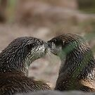 Kissing Otters by Stuart Daddow Photography