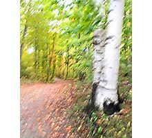 Cottage Road 3 - Sharbot Lake, Ontario Photographic Print