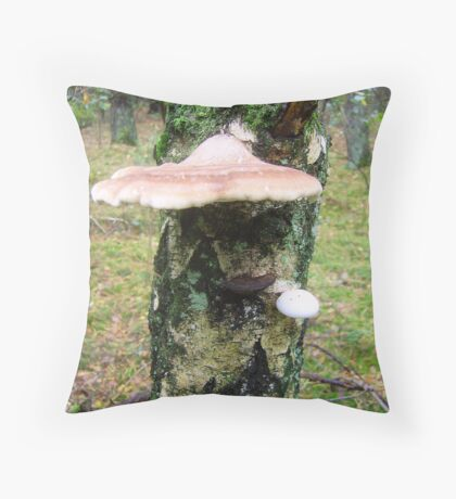 Piptoporus betulinus in 3 stadiums. (berkenzwam) Throw Pillow
