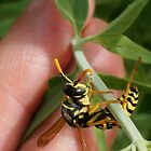 Paper Wasp Working Hard by Betsy  Seeton