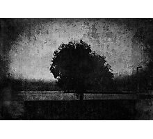 Tree. Sea. Black. White. Photographic Print