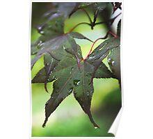 Oak leaf after the rain Poster