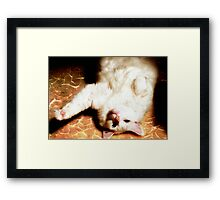 Swimming Backwards Framed Print