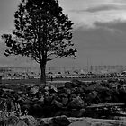 The Tree at the Marina by Siren18