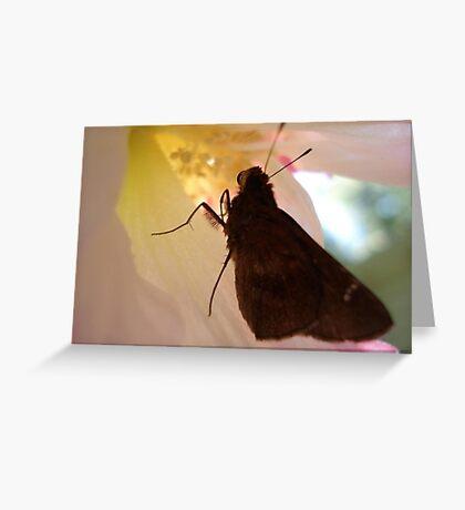 SKIPPER IN CONFEDERATE ROSE Greeting Card