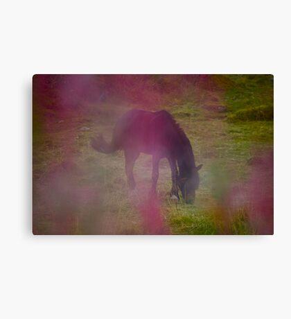 Wonderful Pony feelings .Kabelvåg . Norway . by Brown Sugar . Canvas Print