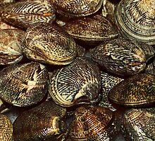 Mussels Sea Shells Seashell  by anjafreak