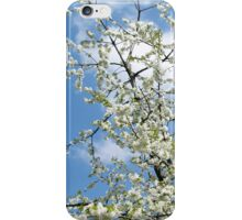 Blossoms Spring Tree Benches  iPhone Case/Skin