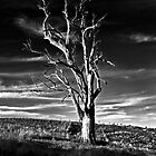 Living Wood by Brett Norman