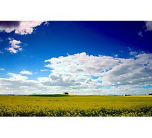 Canola Colours Photographic Print