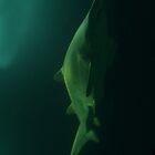 Hunting Shark  by anjafreak