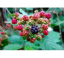 Blackberries Photographic Print