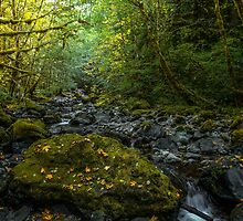 Brice Creek #56 by Charles & Patricia   Harkins ~ Picture Oregon