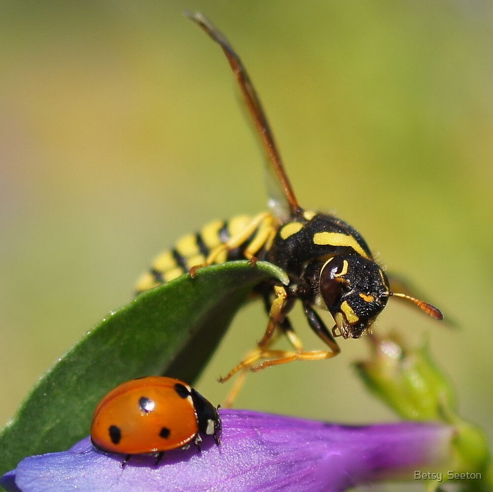 Ladybug and a Paper Wasp by Betsy  Seeton