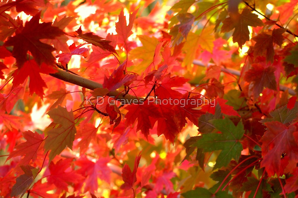 Pick A Color by Diana Graves Photography