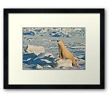 Curious Polar Bear pushups Framed Print