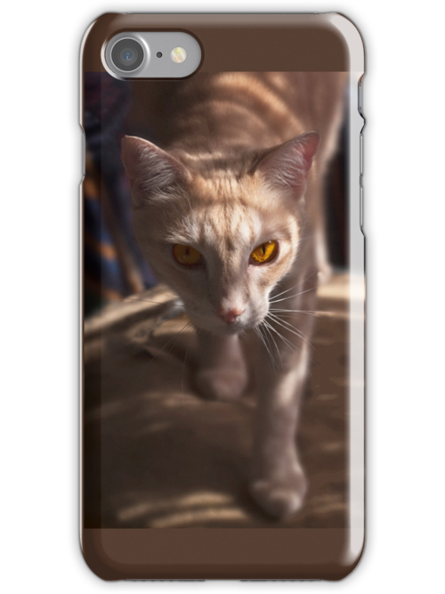 Raymond Shadow Seeker - iPhone case by Odille Esmonde-Morgan