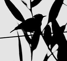 Bird on a wire by Photography by  Carolyn
