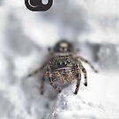 White Spider by jude walton
