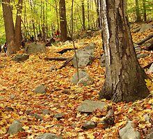 Fall Trail by DesignDiva