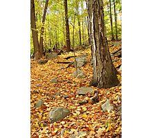 Fall Trail Photographic Print