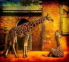 Giraffes  by LudaNayvelt