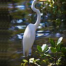 Great Egret  - iPhone case by Odille Esmonde-Morgan