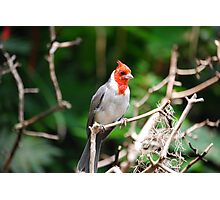 Red Head Photographic Print