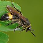 wasp by davvi
