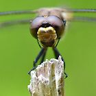Dynamite Dragonflies! by William Brennan