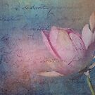 Textured Lotus by Jenny Dean