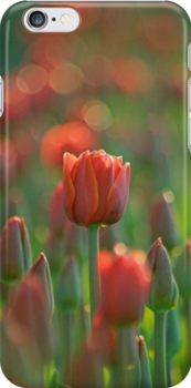 A Morning At The Field iPhone case.  by Todd Rollins