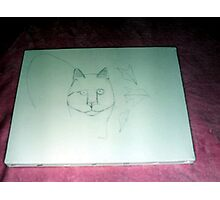 Drawing The Outline For the Cat Painting-October 2010 Photographic Print