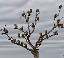 The Answer To How Many Vultures Can Sit On a Tree is... by Michael  Moss