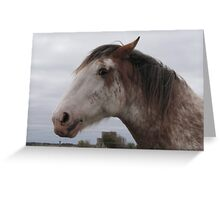 Clydesdale - near Currency Creek, South Australia Greeting Card