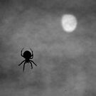 The Spider & The Moon by Brian Gaynor