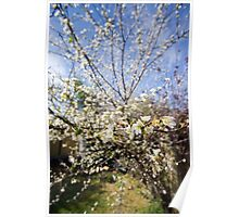 Flowering Plum Poster