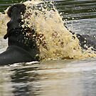 A hippo explosion! by jozi1