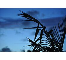 blue silhouette Photographic Print