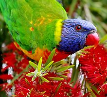 Pure Nectar by Tainia Finlay
